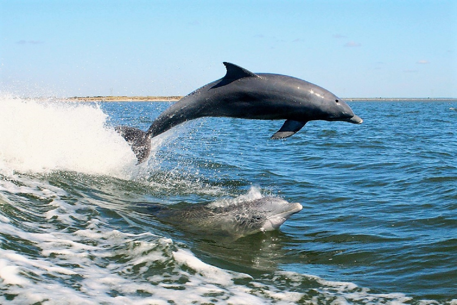 3 of the best reasons to take dolphin tours on St. Geroge Island Fl